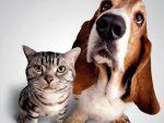 Как избавиться от блох у животных