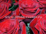 Как продлить жизнь розам? Уход за срезанными розами.