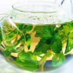 luchshie-sorta-zelenogo-chaya