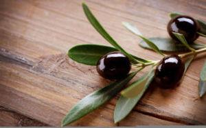 olivki-vsya-pravda-o-produkte