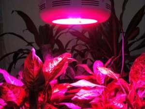 svjetodiodnoje-osvjeshhjenije-dlja-rastjeniy