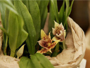 как перевозить комнатные растения