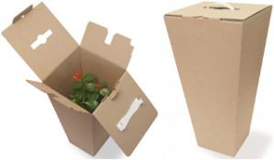 как перевозить комнатные растения1