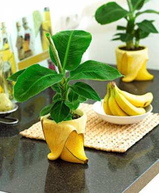 banany-doma